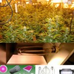 Best Marijuana Lights for Growing Weed Indoors