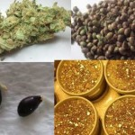 Different Methods of Germinating Marijuana Seeds