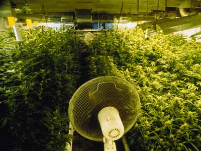 The Importance Of Ventilation In Indoor Cannabis Growing