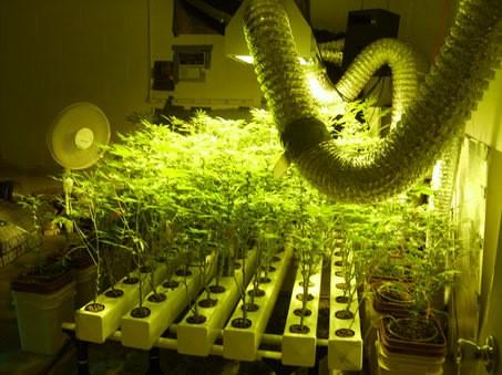 marijuana_hydroponics_setup