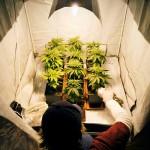 Different Types of Reflective Materials for Indoor Marijuana Grow Room