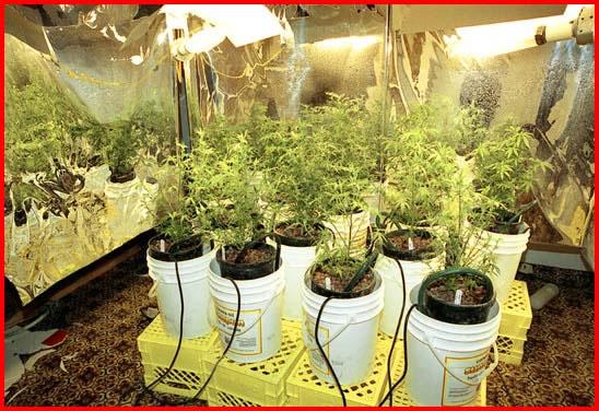 growing marijuana tips things to consider in selecting a marijuana grow space