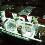 Why Grow Cannabis in a Hydroponic System