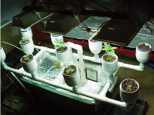 hydroponicgrowsystem