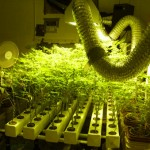 How to Add Ventilation to the Cannabis Grow Room Area