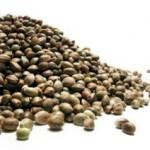 Tips on Buying Marijuana Seeds Online Safely