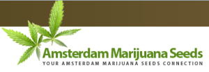 AmsterdamMarijuanaSeeds