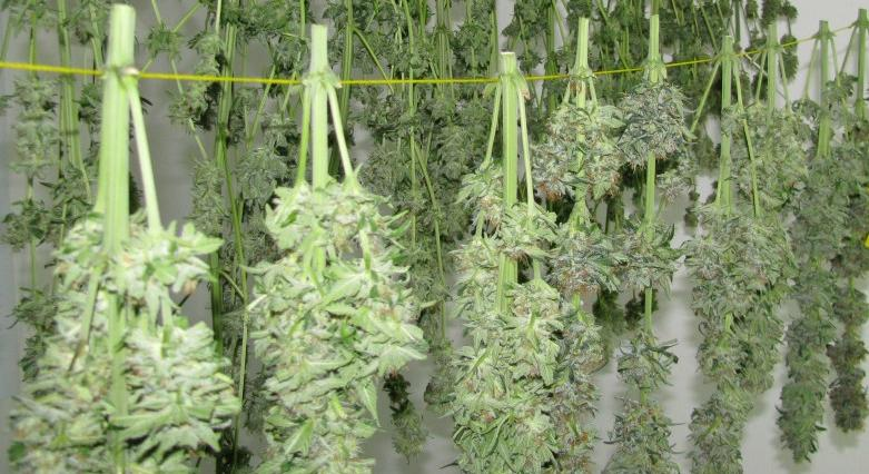how to dry marijuana