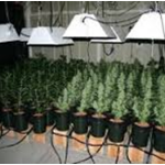 10 Things that you want to Know about Hydroponics Marijuana Growing