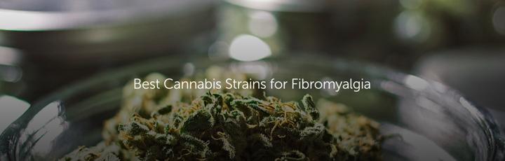 Best Marijuana Strain for Fibromyalgia