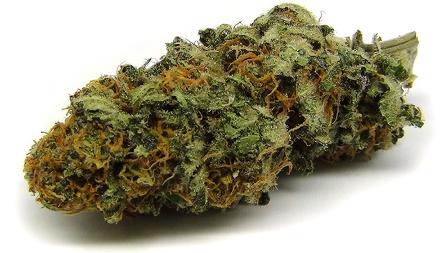 high cbd marijuana strains