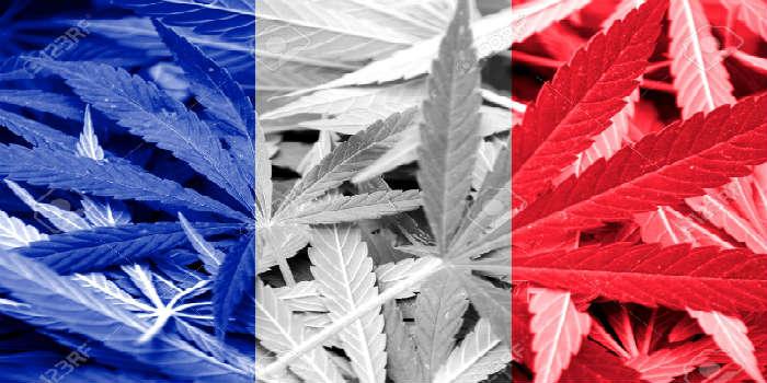 buy marijuana seeds in France