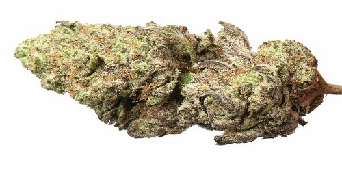 Chrystal Marijuana Strain Review Information and Growing Tips - Where to Buy Chrystal Seeds