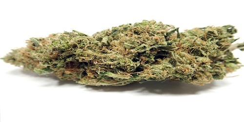 Durban Poison Marijuana Strain Review Information and Growing Tips - Where to Buy Durban Poison Seeds