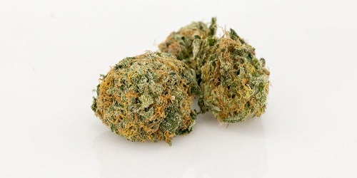Crystal Rain Marijuana Strain Review Information and Growing Tips - Where to Buy Crystal Rain Seeds