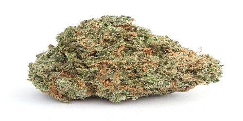 Haze Marijuana Strain Review Information and Growing Tips - Where to Buy Haze Seeds