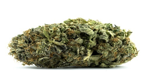 Diesel Marijuana Strain Review Information and Growing Tips - Where to Buy Diesel Seeds