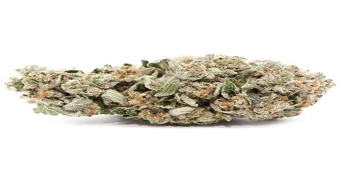 Cheese Marijuana Strain Review Information and Growing Tips - Where to Buy Cheese Seeds