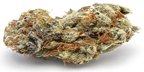White Widow Marijuana Strain Review Information and Growing Tips - Where to Buy White Widow Seeds