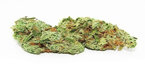 Light of Jah Feminized Marijuana Strain Review Information and Growing Tips - Where to Buy Light of Jah Feminized Seeds