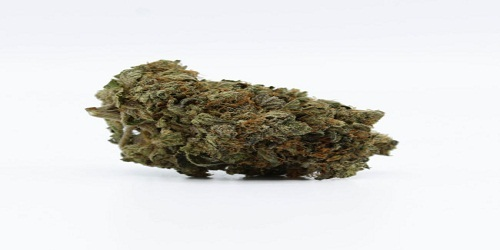 Citral Marijuana Strain Review Information and Growing Tips - Where to Buy Citral Seeds