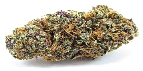 Holland's Hope Marijuana Strain Review - Order Holland's Hope Cannabis Seeds