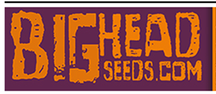 Big Head Seeds Review