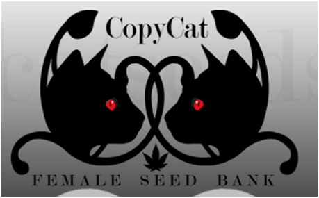 Copycat Seeds Review