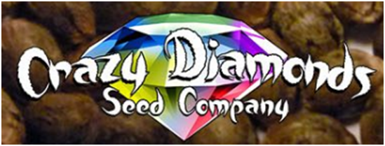 Crazy Diamonds Seed Company Review
