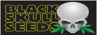 Black Skull Seeds Review