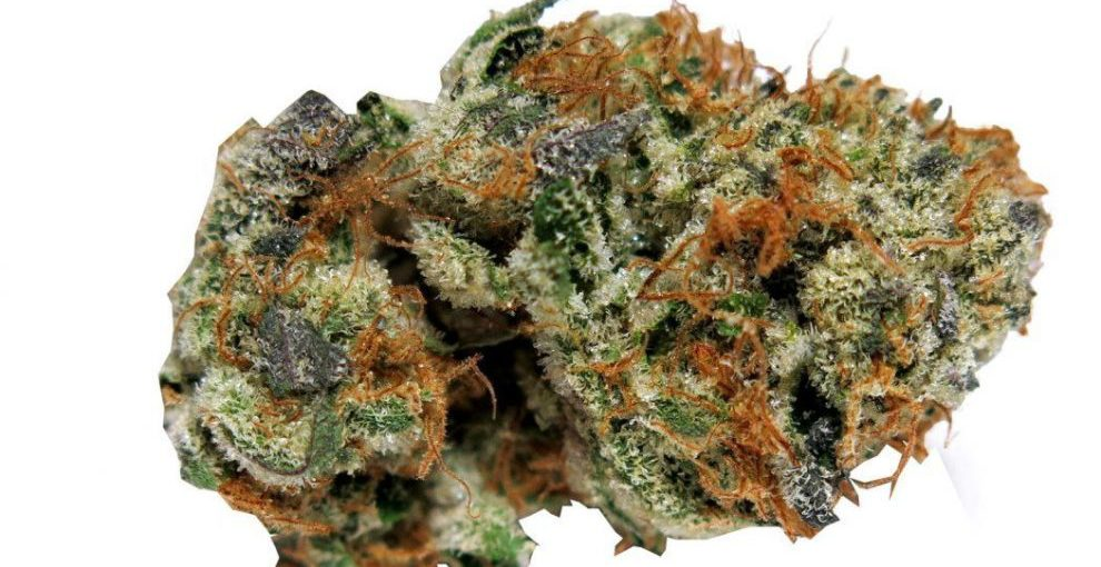 Burnt Cookies Cannabis Strain Review